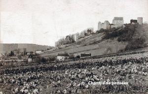 L'attribut alt de cette image est vide, son nom de fichier est Chevreuse-champs-de-fleurs-fin-XIX-Pop-PV-1-300x192.png.